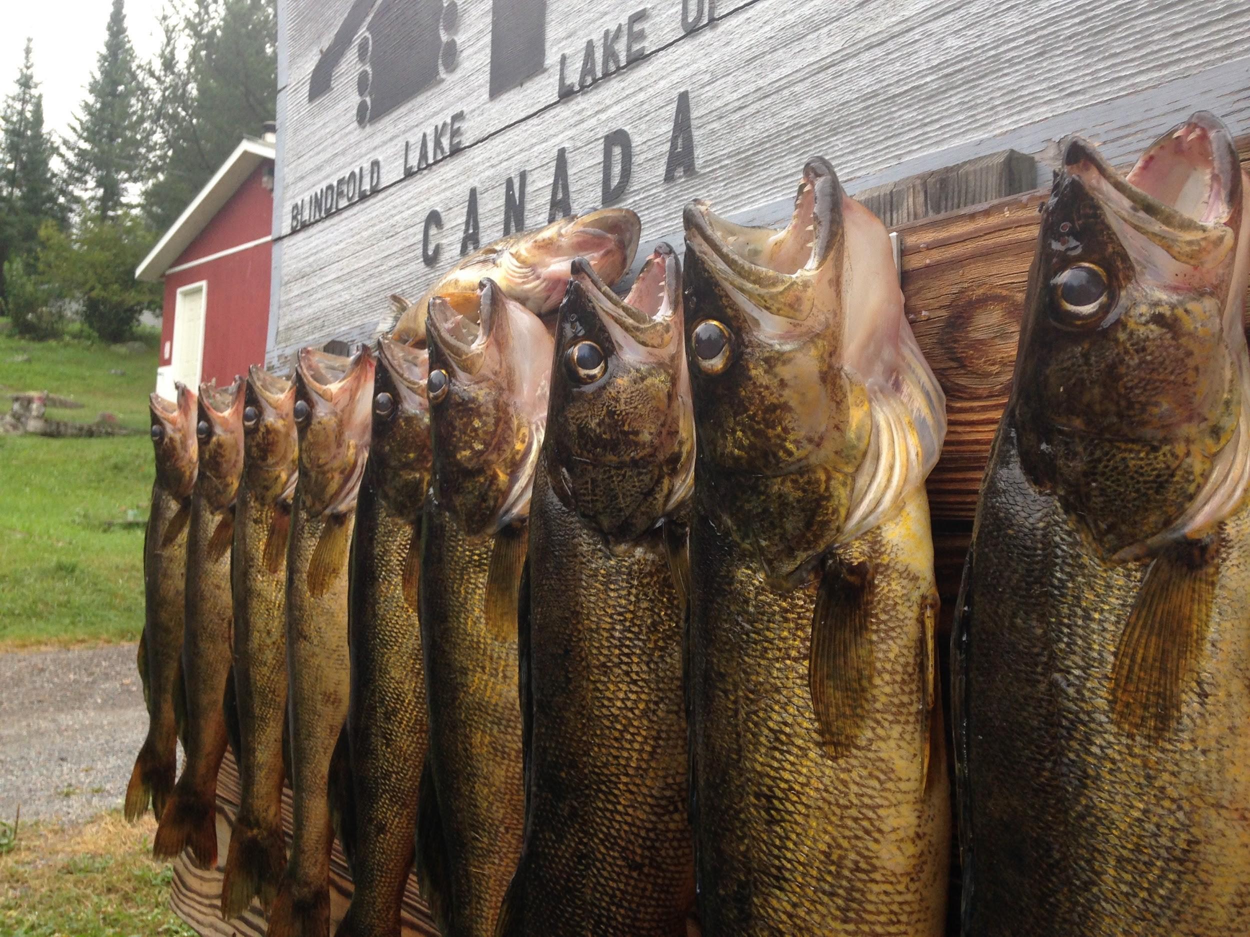 Fishing | Tyc's Blindfold Lake Resort